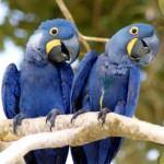 bichos do pantanal 5