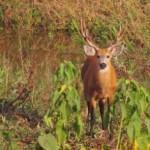 bichos do pantanal 7