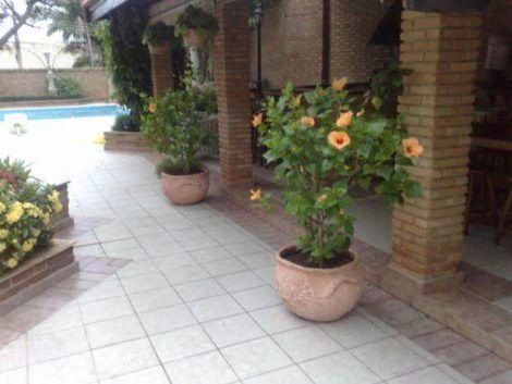 imagem 14 470x353 - VASOS DE FLORES decorativos para ambientes mais alegres