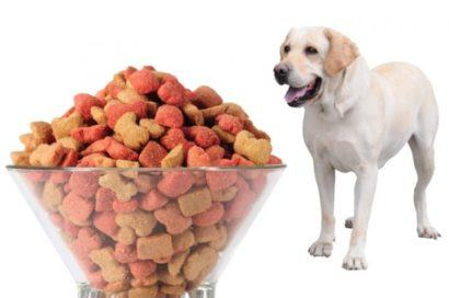 qual é a quantidade certa de ração para cachorro grande